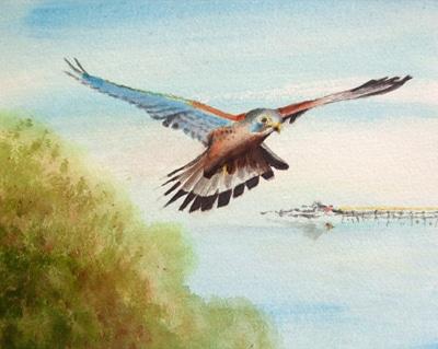 Flight Over Weston